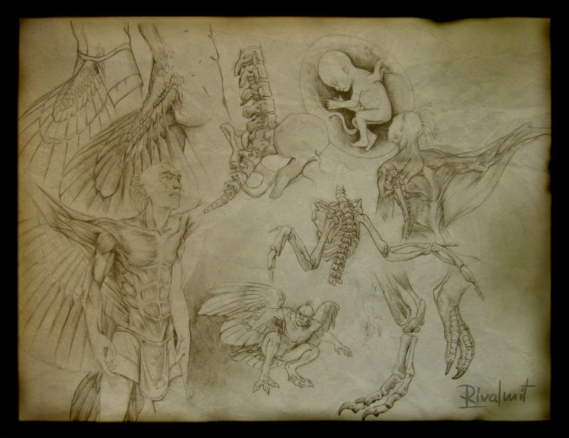 drawing greek harpy anatomy mythology anthropomorphic Drawings Harpy anatomy Drawings