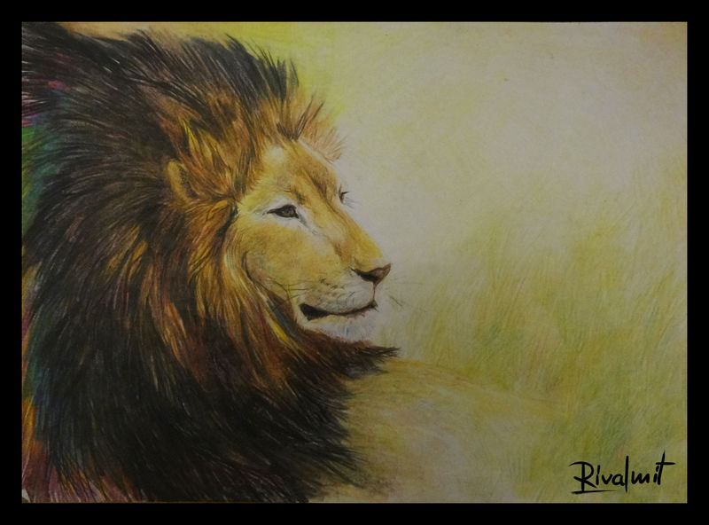 coloured pencils lion africa drawing Drawings Lion Drawings