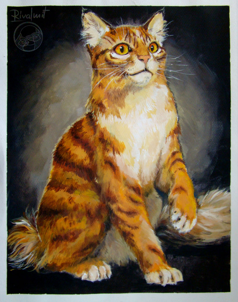 cat painting acrylic maine coon Paintings Maine coon Paintings