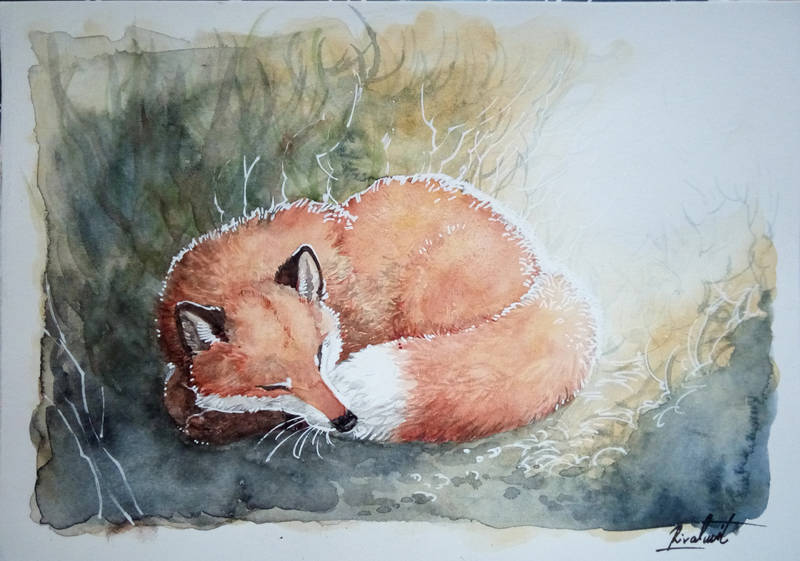 fox watercolor drawing traditional traditionalart Drawings Sweet dreams Drawings