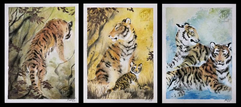 drawing felinae ef tiger watercolor Drawings Retrospective Drawings